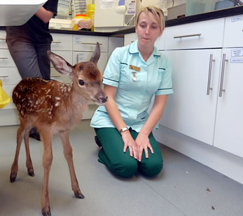 Wildlife Rescue North Devon